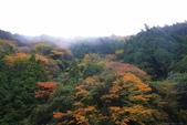 日本四國人文藝術+楓紅深度之旅-別府峽楓葉散策53-23:A81Q0016.JPG