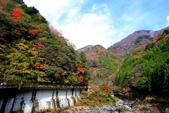 日本四國人文藝術+楓紅深度之旅-別府峽楓葉散策53-23:A81Q0021.JPG