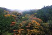 日本四國人文藝術+楓紅深度之旅-別府峽楓葉散策53-23:A81Q0015.JPG
