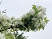 杜鵑花展在大安森林公園:20210304_152646-uid-F200C590-7F82-4349-AFBF-13966F1E2DBD-7784168.jpg