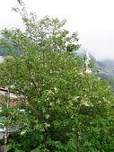阿爾巴尼亞_喀魯耶山頭城KRUJA_史肯伯格博物館:DSC00354A阿爾巴尼亞__喀魯耶山頭城景緻.jpg