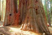 美國國家公園31天之旅紀實隨手拍搶先分享-2+好文章 :IMG_1451美國神木(美洲杉)國家公園SEQUOIA NATIONAL PARK.JPG