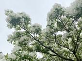 杜鵑花展在大安森林公園:20210304_152751-uid-2C5E553E-EF5B-4C23-B126-62FCB07F8D54-9709773.jpg