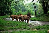 15-5-峇里島-Safari Marine Park野生動物園:IMG_1259峇里島-Safari Marine Park野生動物園.jpg