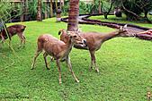 15-5-峇里島-Safari Marine Park野生動物園:IMG_1279峇里島-Safari Marine Park野生動物園.jpg
