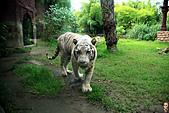 15-5-峇里島-Safari Marine Park野生動物園:IMG_1165峇里島-Safari Marine Park野生動物園.jpg