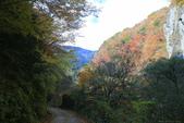 日本四國人文藝術+楓紅深度之旅-別府峽楓葉散策53-23:A81Q0049.JPG