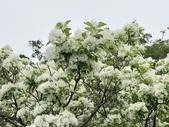 杜鵑花展在大安森林公園:20210304_153016-uid-18B463D4-C4F1-44EB-BB08-3E32971D13A8-11557167.jpg