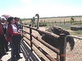 南非探索之旅:DSC01619南非-開普敦-駝鳥園
