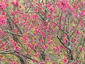 日本關西賞櫻深度之旅-鳥取花迴廊42-8:IMG_2351.JPG