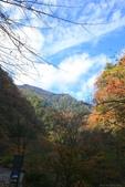 日本四國人文藝術+楓紅深度之旅-別府峽楓葉散策53-23:A81Q0056.JPG