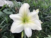 我家花園的花卉:20180429_152235-uid-EB205D64-005A-47F6-A34A-BB1CC8C5024B.jpeg