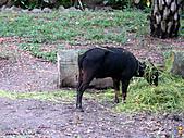 15-5-峇里島-Safari Marine Park野生動物園:IMG_6519峇里島-Safari Marine Park野生動物園.jpg
