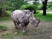 15-5-峇里島-Safari Marine Park野生動物園:IMG_6562峇里島-Safari Marine Park野生動物園.jpg