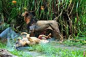 15-5-峇里島-Safari Marine Park野生動物園:IMG_1236峇里島-Safari Marine Park野生動物園.jpg