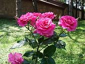 塞爾維亞SERBIA_貝爾格勒BELGRADE采風:DSC01358塞爾維亞_貝爾格勒BELGRADE_花卉.JPG