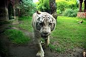 15-5-峇里島-Safari Marine Park野生動物園:IMG_1166峇里島-Safari Marine Park野生動物園.jpg