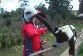 美女們被狐猴溫馨親切有禮的親親_在馬達加斯加-狐猴島Lemur Island:IMG_0356.jpg