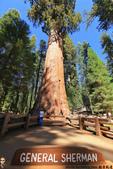 美國國家公園31天之旅紀實隨手拍搶先分享-2+好文章 :IMG_1586紀念南北戰爭Sherman 將軍目前存活最高最大的一株Sherman Tree.JPG