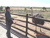 南非探索之旅:DSC01621南非-開普敦-駝鳥園