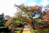 日本四國人文藝術+楓紅深度之旅- 秋之岡山後樂園53-44:A81Q0499.JPG