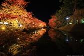 日本北關東東北行-8弘前城-櫻花紅葉園區驚豔楓紅.....:A81Q0692.JPG