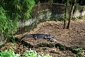 15-5-峇里島-Safari Marine Park野生動物園:IMG_1097峇里島-Safari Marine Park野生動物園.jpg