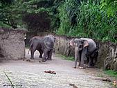 15-5-峇里島-Safari Marine Park野生動物園:IMG_6520峇里島-Safari Marine Park野生動物園.jpg