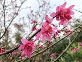 春節參拜走春-廟宇之美:IMG_4226.JPG