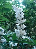 塞爾維亞SERBIA_貝爾格勒BELGRADE采風:DSC01299塞爾維亞_貝爾格勒BELGRADE_花卉.jpg
