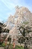 日本關西賞櫻深度之旅-平野神社- 42-22:A81Q2102.JPG