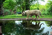 15-5-峇里島-Safari Marine Park野生動物園:IMG_1167峇里島-Safari Marine Park野生動物園.jpg