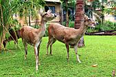 15-5-峇里島-Safari Marine Park野生動物園:IMG_1280峇里島-Safari Marine Park野生動物園.jpg