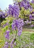 紫藤咖啡園-淡水二店:20210322_122842-uid-0F7F62A5-6EE4-4099-8C33-E3302F832774-9258418.jpg