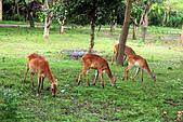 15-5-峇里島-Safari Marine Park野生動物園:IMG_1113峇里島-Safari Marine Park野生動物園.jpg