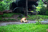 15-5-峇里島-Safari Marine Park野生動物園:IMG_1260峇里島-Safari Marine Park野生動物園.jpg