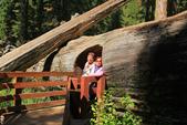美國國家公園31天之旅紀實隨手拍搶先分享-2+好文章 :IMG_1606美國神木(美洲杉)國家公園SEQUOIA NATIONAL PARK.JPG