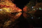 日本北關東東北行-8弘前城-櫻花紅葉園區驚豔楓紅.....:A81Q0694.JPG