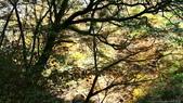 日本四國人文藝術+楓紅深度之旅-別府峽楓葉散策53-23:IMG_6218.JPG