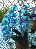 日本關西賞櫻深度之旅-鳥取花迴廊42-8:IMG_2382.JPG