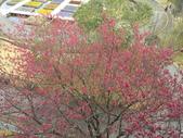 日本關西賞櫻深度之旅-鳥取花迴廊42-8:IMG_2349.JPG