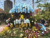 日本關西賞櫻深度之旅-鳥取花迴廊42-8:IMG_2392.JPG