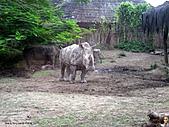 15-5-峇里島-Safari Marine Park野生動物園:IMG_6563峇里島-Safari Marine Park野生動物園.jpg