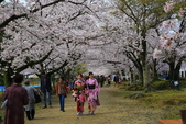 日本九州春櫻尊爵全覽之旅-1_福岡市舞鶴公園-綻放春櫻:A81Q5688.JPG