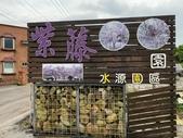 紫藤咖啡園-淡水二店:20210322_140439-uid-DFCC8875-F1BD-4BBF-A0DF-02FF92EF3823-8236560.jpg