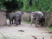 15-5-峇里島-Safari Marine Park野生動物園:IMG_6522峇里島-Safari Marine Park野生動物園.jpg
