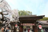 日本關西賞櫻深度之旅-平野神社- 42-22:A81Q2112.JPG