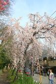 日本關西賞櫻深度之旅-平野神社- 42-22:A81Q2120.JPG