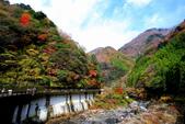 日本四國人文藝術+楓紅深度之旅-別府峽楓葉散策53-23:A81Q0022.JPG