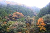 日本四國人文藝術+楓紅深度之旅-別府峽楓葉散策53-23:A81Q0010.JPG